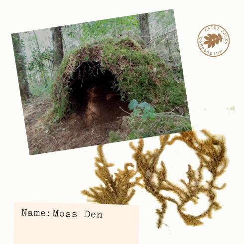 Cairi Jacks – Moss Den